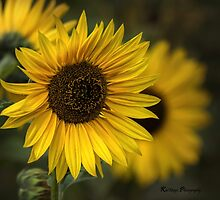 Sunflower by KatMagic Photography