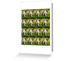 Fox Terrier With His Yellow Ball In A Pattern. Greeting Card