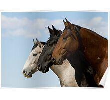 Three Stallions Poster