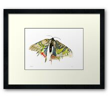 Madagascar Sunset Moth Framed Print