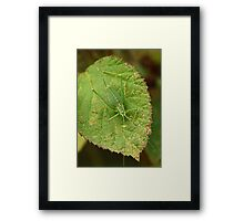 Speckled Bush Cricket Framed Print