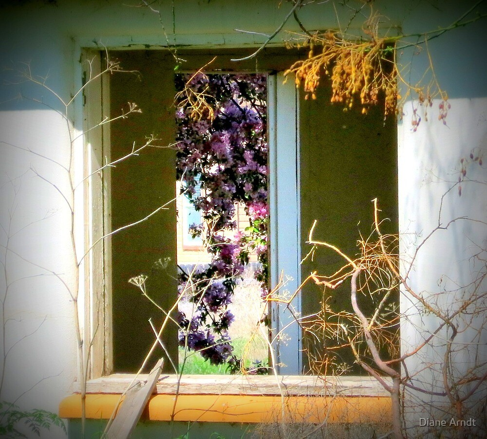 Two Window's by Diane Arndt