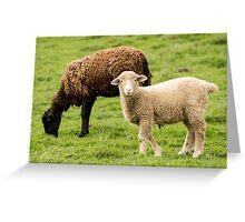 Mt Angel Abbey Lamb - Oregon Greeting Card