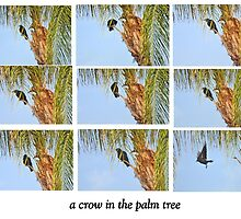 CROW IN A PALM TREE by JAYMILO