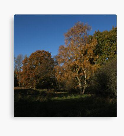 Silver Birch and The Oak Canvas Print