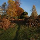 The Tunstall Trails, Suffolk by wiggyofipswich