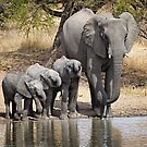 Elephant Mom and Babies by Michael  Moss