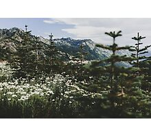 Mount Rainier Summer Wildflowers Photographic Print