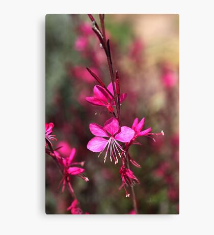 Pink Butterfly, Flowers Canvas Print