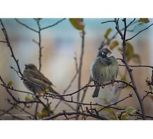 Passer Domesticus - Eye Contact With A Male House Sparrow | New York City, New York Photographic Print