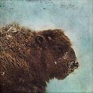 Wood Buffalo by Priska Wettstein