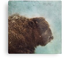 Wood Buffalo Metal Print