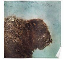 Wood Buffalo Poster