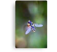 Finding the Pollen Canvas Print