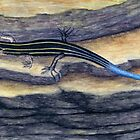 Blue Tailed Skink by M Rogers