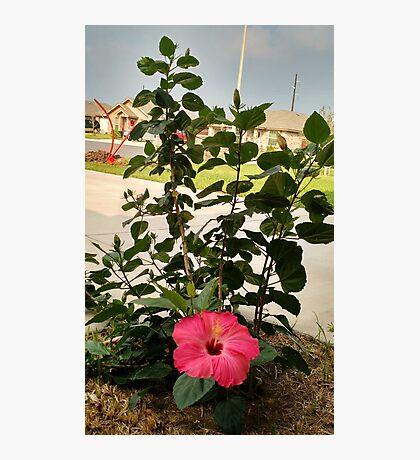 A Flower Amidst Destruction Photographic Print