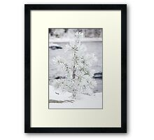 Small tree covered in snow Framed Print