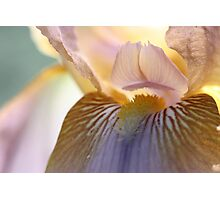 Lighting Iris Photographic Print