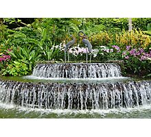Waterfall, Sculpture & Orchids. Photographic Print