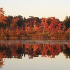 Fall Foliage by Kay Reynolds