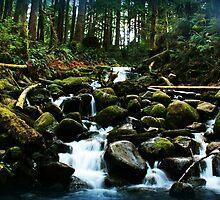 Wallace Falls Trail by Jennifer Bishop
