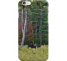 Cows 2 iPhone Case/Skin