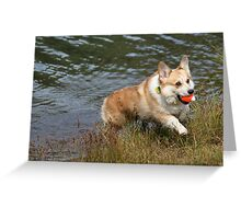 Corgi Fetch Greeting Card