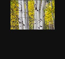 Colorful Autumn Aspen Tree Colonies Pullover