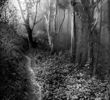 Primordial Woods, Mount Davidson by Richard Mason