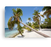 Morrocoy National park, a paradise with coconut trees, white sand and deep blue sky in Venezuela Canvas Print
