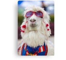 White lama wearing sunglass and a colored scarf, Peru Canvas Print