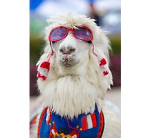 White lama wearing sunglass and a colored scarf, Peru Photographic Print