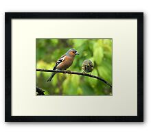 We can't keep on meeting like this.........! Framed Print