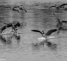 Flock by Dwellsphoto