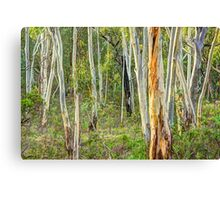 Southern Gums - Tumbarumba - The HDR Experience Canvas Print