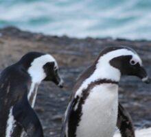 A Trio of Penguins Sticker