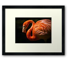 Pink Red Flamingo Bird Nature Animal Birds Framed Print