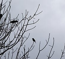 Bradfordville Birds by candysfamily