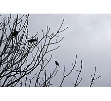 Bradfordville Birds Photographic Print