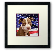 American pitbull Terrier puppy Framed Print