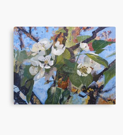 Pear Blossom Canvas Print