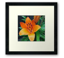 Digital art painting style orange lily flower and green leaves. Framed Print