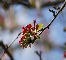 Spring Blossoms in the Southern Hemisphere by RGKphotos