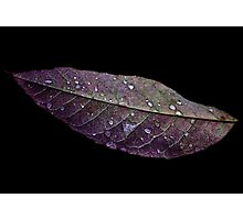 Purple and Green Leaf Photographic Print