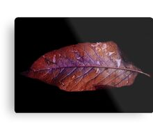 Unique Leaf Metal Print
