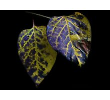 Yellow and Purple Leaves  Photographic Print