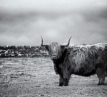 The Shaggy Cow by GBPStore