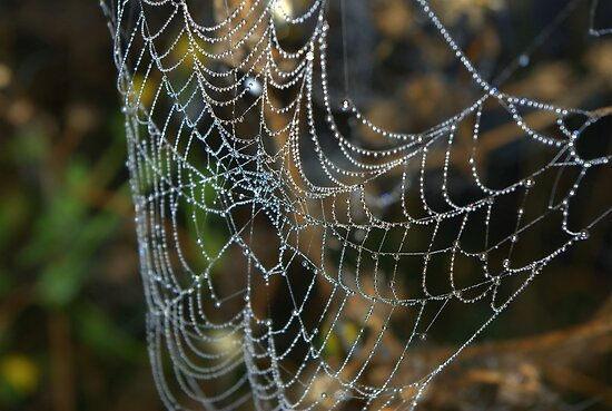 Web jewels by Kerry  Hill