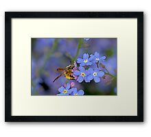 Bee and Forget Me Not Flowers Framed Print