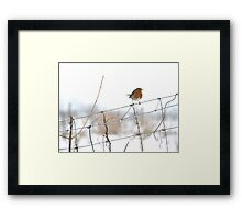 Robin singing on wire fence Framed Print